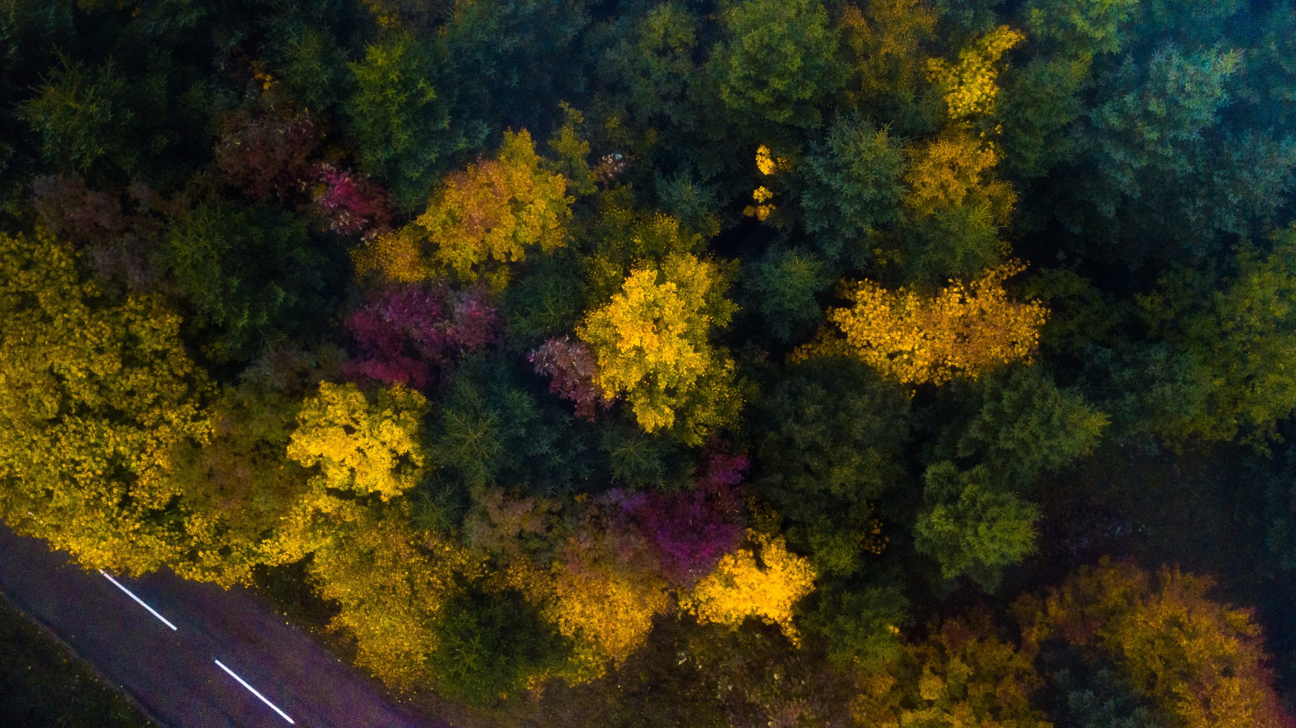 beautiful forest from above